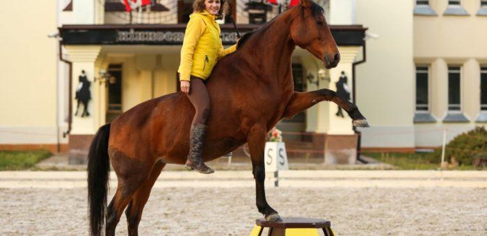 Чи верхова їзда є гуманним способом використання коней?