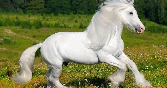 White-colored horses exist!