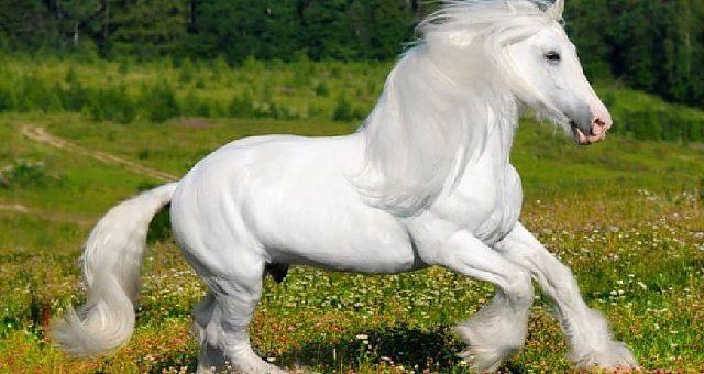Біла масть коней існує!