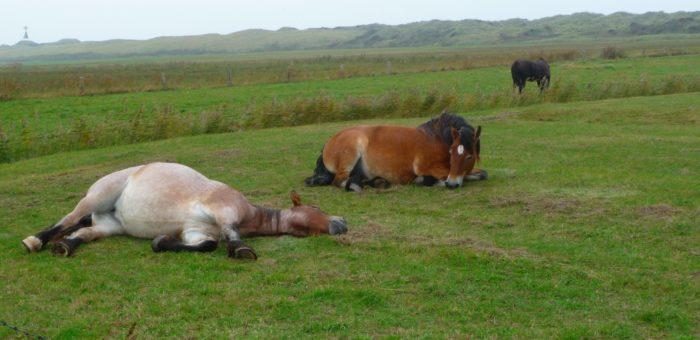 Чи сняться коням сни?